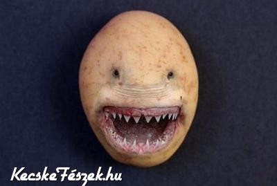Krumpli ragadozó