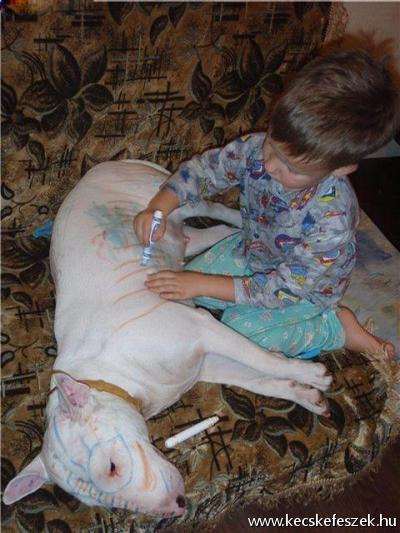 Így hagyd otthon a gyereked egy harci kutyával...