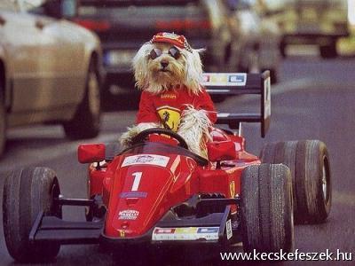 F1 versenyző:P
